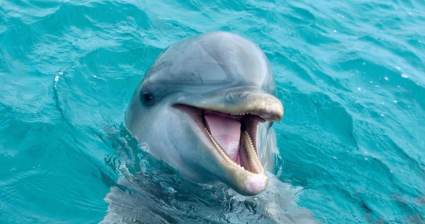 jojo dolphin