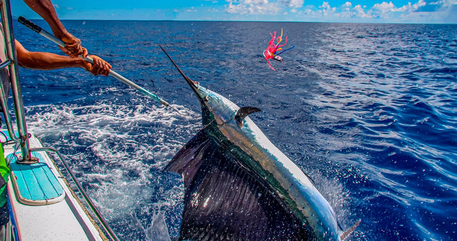 Fishing in Bahamas