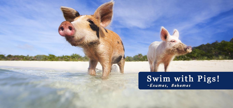 pig beach bahamas sights