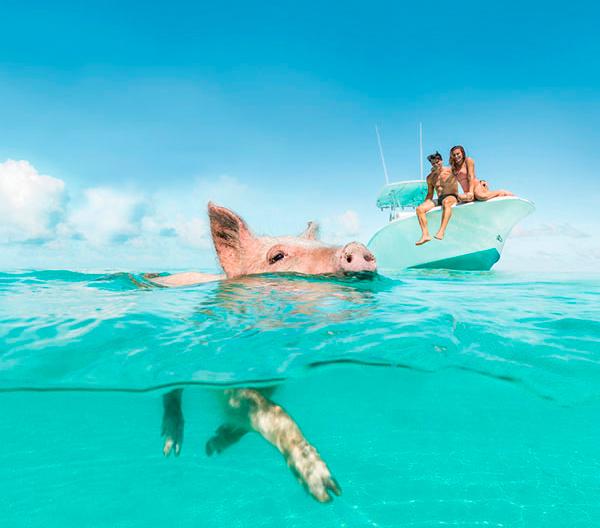 Pig beach Exumas Bahamas